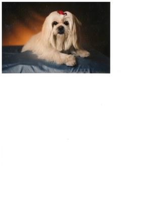 dog shot 1992